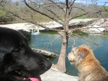 Austin dog hiking, dog walking, and pet sitting services