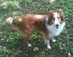 Austin dog sitting and dog walking